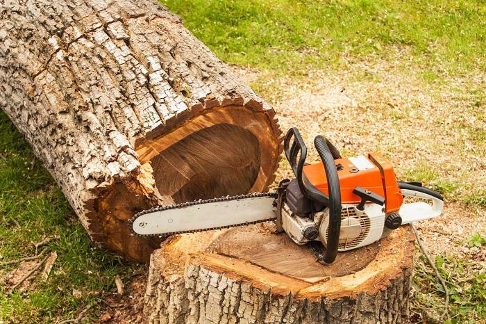 Спил любых деревьев, дробление пней, расчистка участков